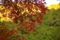 DSC_6799_convert_20131119003759.jpg
