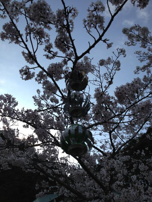 桜color 2013-1