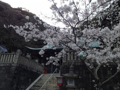 桜color 2013-2