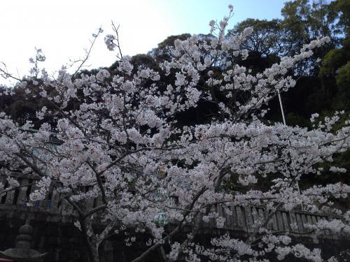 桜color 2013-3