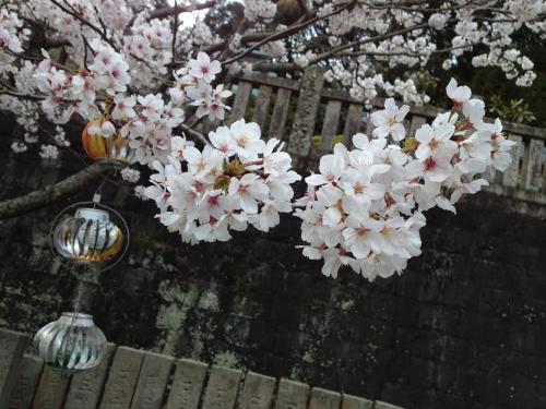 桜color 2013-4