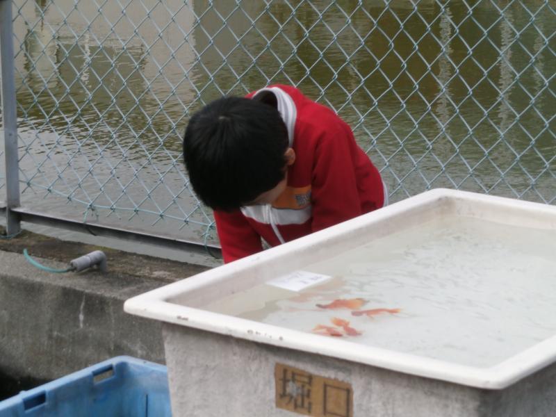 2013/11/4 堀口養魚場 次男