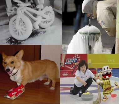 五輪カーリングで ペット犬がゴキブリホイホイに捕まる:完全無修正画像
