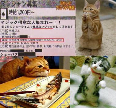 可愛い子猫と超ハイレベルなアルバイト募集記事完全無修正画像