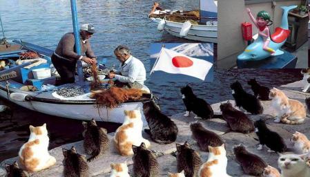 民主党鳩山政権は真に国民の為に闘っているのだろうか完全無修正猫写真