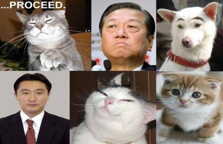 民主党小沢幹事長はじめ疑惑で支持率低下の民主党の新たなエサは何を完全無修正デジカメ猫の写真