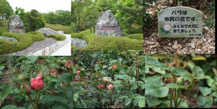 ゴールデンウイークに行った富士市の薔薇の花園の広見公園で完全無修正写真画像ですわ