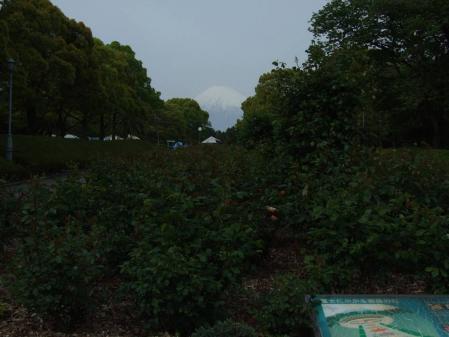 富士市の広見公園にそびえ立つ富士山写真の完全無修正写真ですわ