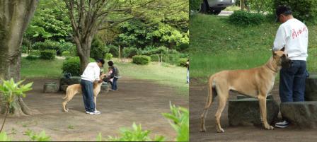 ボクサー犬完全無修正写真画像だよん