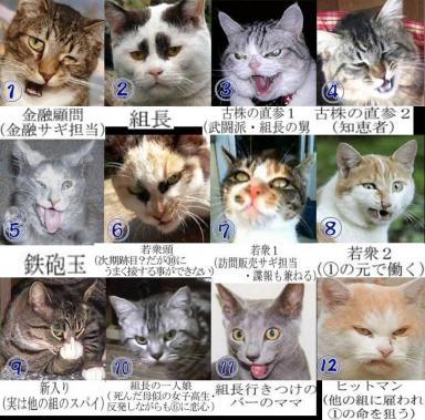 普天間基地移設問題不解決で動き出す民主党系列裏の暴力団ヤクザの猫たち完全無修正写真