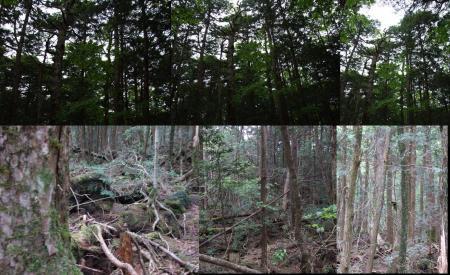 青木が原樹海の中で写真を撮った完全無修正写真画像