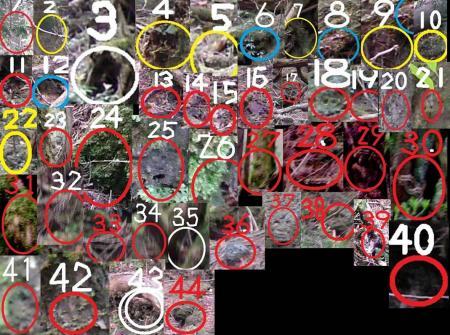 青木カ原樹海 富士樹海 44人の心霊が写った完全無修正心霊写真