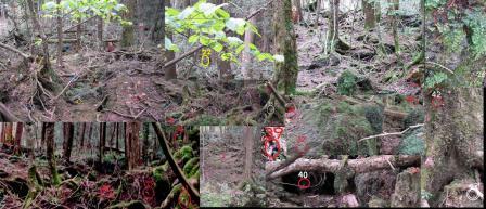 富士樹海 青木が原樹海にての心霊写真
