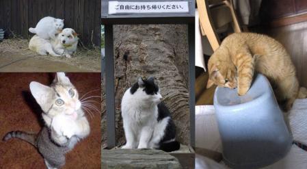 猫は可愛くて好きだが 捨てられた猫は かわいそう完全無修正写真