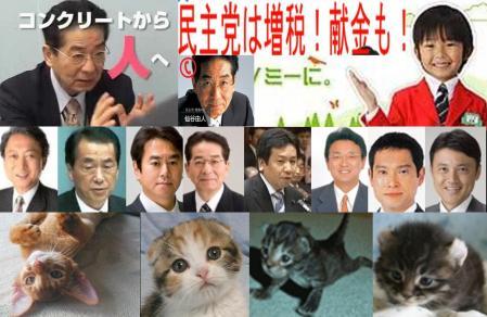 可愛い子猫 何がコンクリートから人へだ 仙石由人 民主党は増税 献金もで有名だ完全無修正の子猫デジカメ編集お写真画像