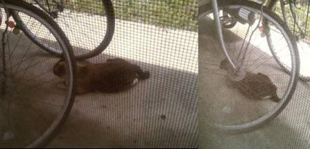 暑さの中で日かげで休む野良猫の完全無修正写真