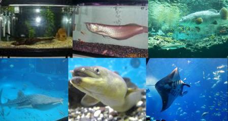 大きくてキモい熱帯魚が入った水槽の横で面接試験を受けさせられたの完全無修正写真