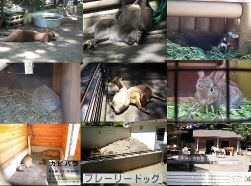 残暑で夏バテしてそうな元気ない多くの動物たち