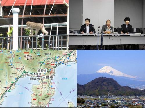 猿の騒動で靜岡県東部地方の裾野市や三島市や沼津市や長泉町は役たたずの役人で猿一匹も捕獲できないのが現状です
