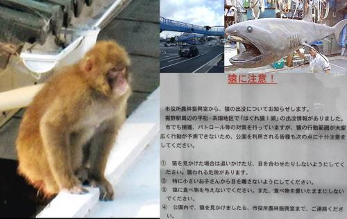サルの騒動で靜岡県沼津市で撮ったサルの写真と裾野市役所の猿に注意の看板写真