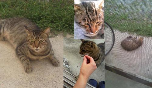 捨て猫の野良猫が我が家に居座りエサを求める猫に名前を