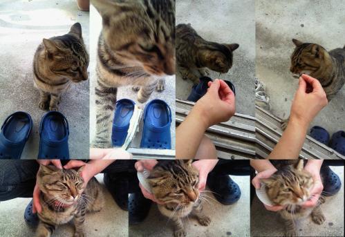 朝に夕にエサを求めにやってくる野良猫の桃ちゃん