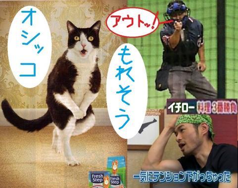 猫がオシッコを我慢する写真だが、ペットの猫がオシッコする場所を覚えないからってアウトでイチロー選手も一気にテンションが下がってしまった画像です
