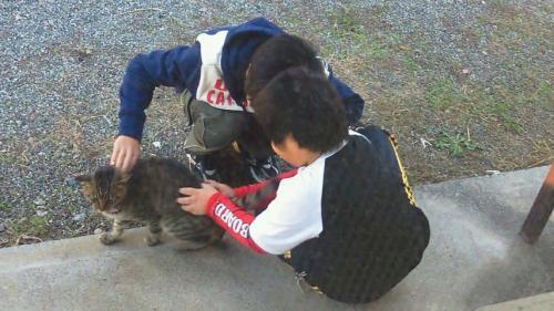 地域猫として近所の子供達にも可愛いがられている野良猫の写真です