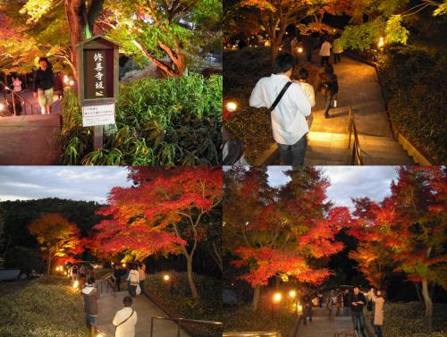 虹の郷のライトアップも始まった頃に修善寺坂を通り多くの方が紅葉狩りをする様子の風景写真