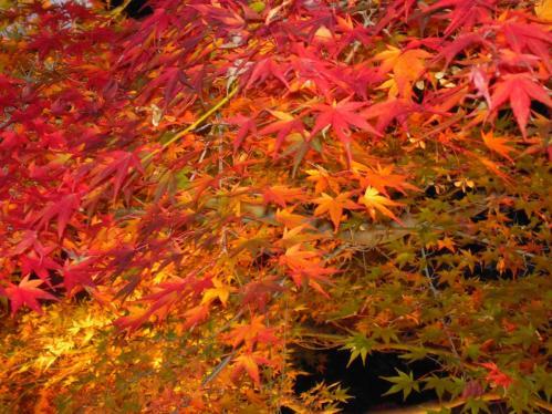 この虹の郷の修善寺坂で自分が撮ったライトアップ紅葉狩りの写真はコレだ