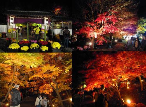 紅葉狩りの虹の郷のメインゲートと風景写真