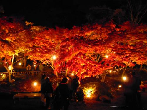 虹の郷の紅葉狩りのゲートを入って自分が撮った紅葉狩り写真