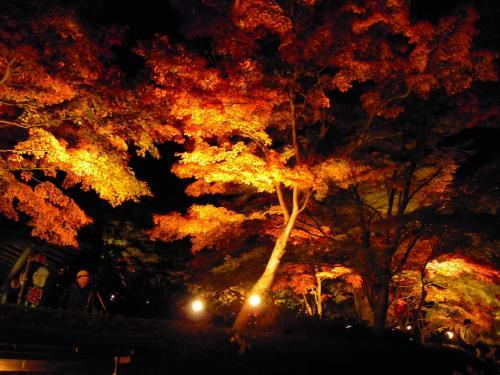紅葉狩りでライトアップされた虹の郷で自分が撮った写真