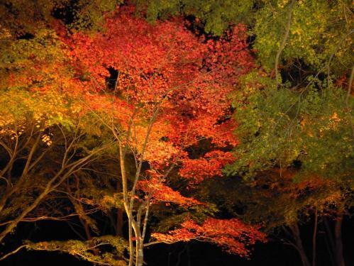 紅葉狩りで虹の郷にて最後に自分が撮った紅葉写真です