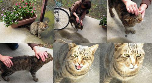 地域猫の桃ちゃんに朝食をあげてなでる嫁の智んころ姉ちゃんの写真ですわい