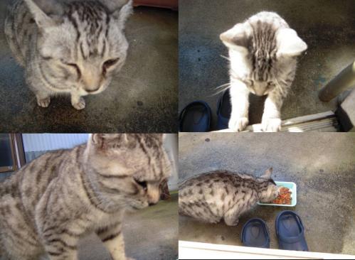 地域猫の新たな仲間の猫が登場してエサを与える写真です
