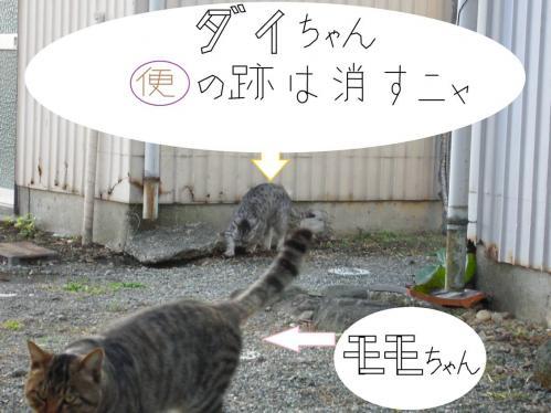 地域猫の新たな仲間のダイちゃんは便の跡も臭いも消してる写真です