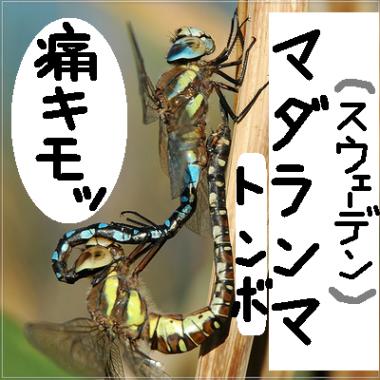大自然の中で愛の営み…虫たちの交尾する写真いろいろ(スウェーデンのトンボでマダランマ)1