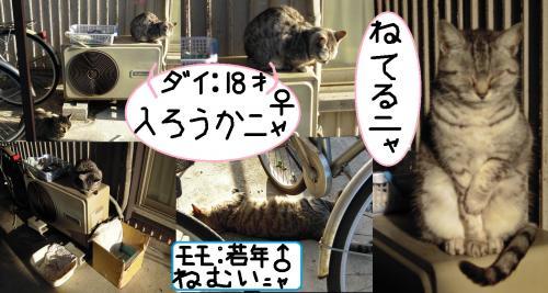 地域猫2匹の為に作成したホットハウスに入らずにただぬくぬくと眠る高齢猫のダイちゃんのデジカメ写真