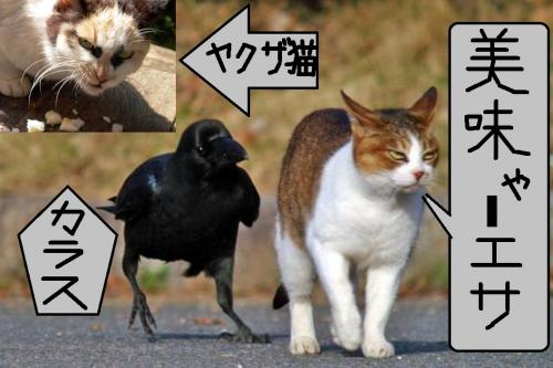 地元地域猫のヤクザ風の猫とカラスが悪巧みでさまよっていた写真