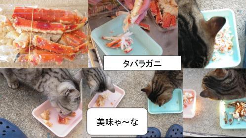 地域猫2匹達に忘年会の残りのタバラガニをエサにしてあたえた写真