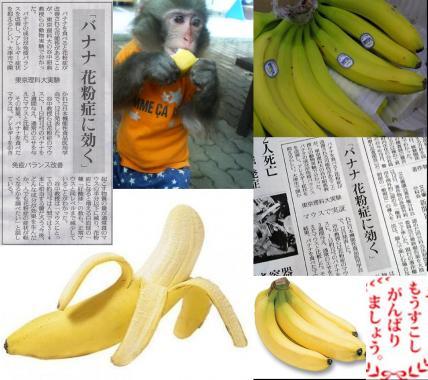 花粉症対策でバナナは花粉症に効く 東京理科大学研究成果