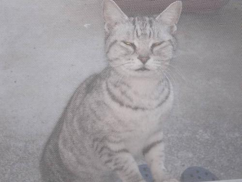 実家の母には土産を買ったが 帰宅すると地域猫のメス猫18才のダイちゃんがお土産私には無いの?の顔をされた