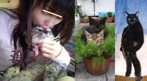 野良猫たち2匹からペルシャ猫高齢地域猫のチータを守る嫁の写真です