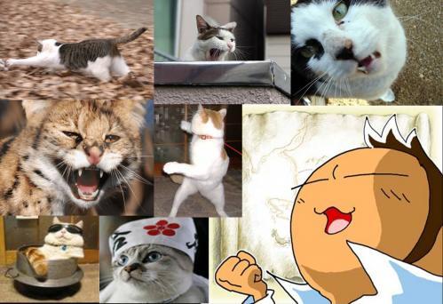 おもしろ写真で野良猫が憎い!畜生!必ず捕まえてやるぜ