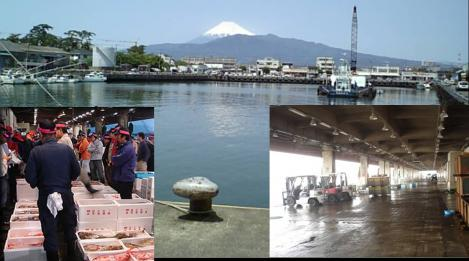 いけのや店舗は毎日早朝から富士山の見える沼津港へ魚を買いに行っている