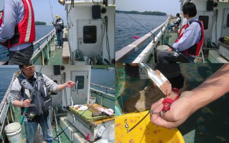 戸田湾の釣り船にて嫁がイワシを6匹釣った写真