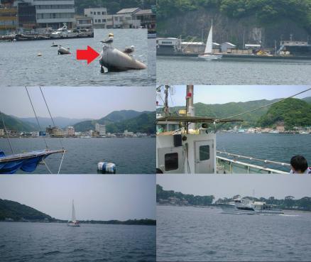 戸田湾での海釣りで船釣りの様子で海猫のアップ写真に多くのフェリーの写真