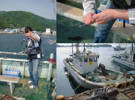 戸田湾での夕暮れに嫁は多くのイワシやサバを釣り上げたがまもなく16時で終了した時の写真