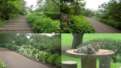 公園内の紫陽花の道を歩いているの野良猫に遭遇した 野良猫は多かった時の写真
